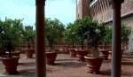 Veduta sul giardino con i vasi di agrumi